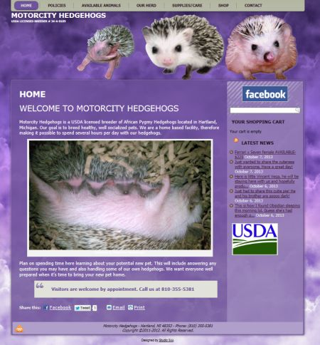 motorcity, hedgehogs, mi, hedgehog breeder, usda, studio 544, freelance web designer